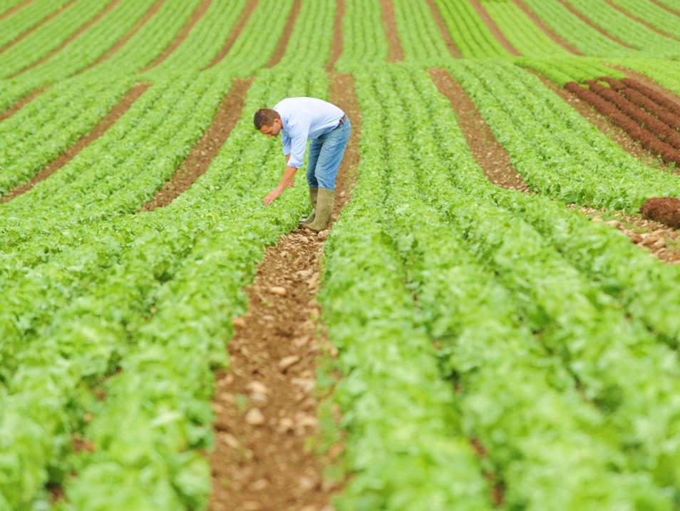 Rohware Salat und Gemüse