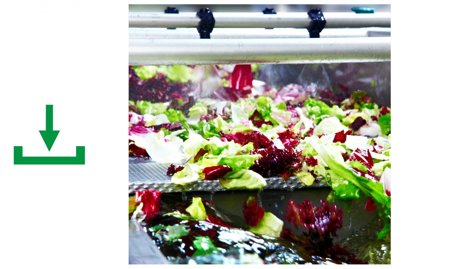 Waschanlage Salat